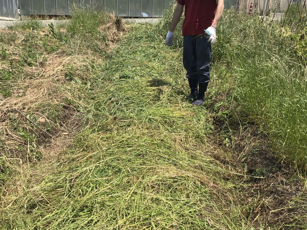 種を降ろしたら、草をかぶせました。
