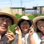 【自然農】みんなで赤そら豆を収穫!そして、落花生が発芽(2019/05/27)