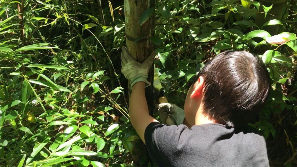 竹を切り倒している所