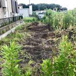 【自然農】悲しい出来事!山椒とビワの木が犠牲に・・・(2019/08/02)