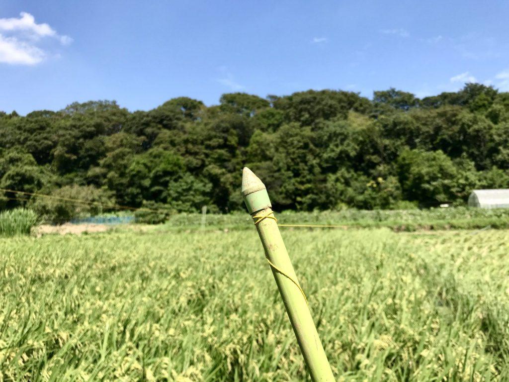 糸張りはこんな感じで棒を斜めに挿して、そこに糸を張っていきます
