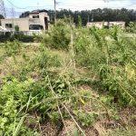 【自然農】台風15号はすごかったですね、まんまる楽園の被害は?(2019/09/11)