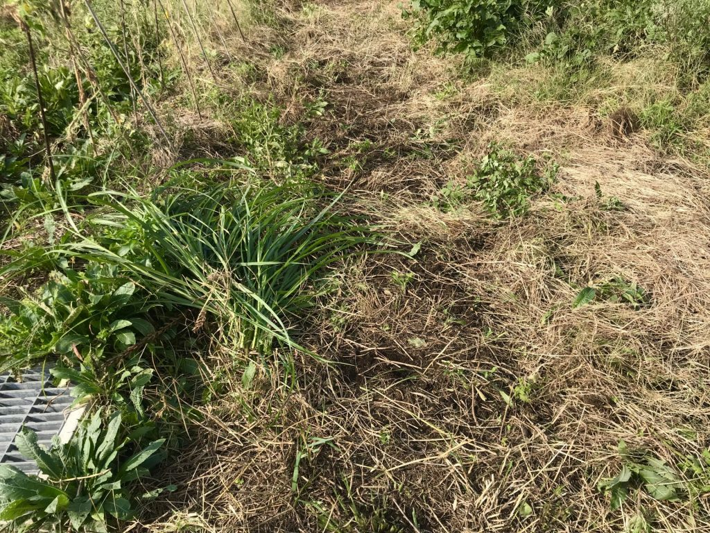 草刈り後の畝