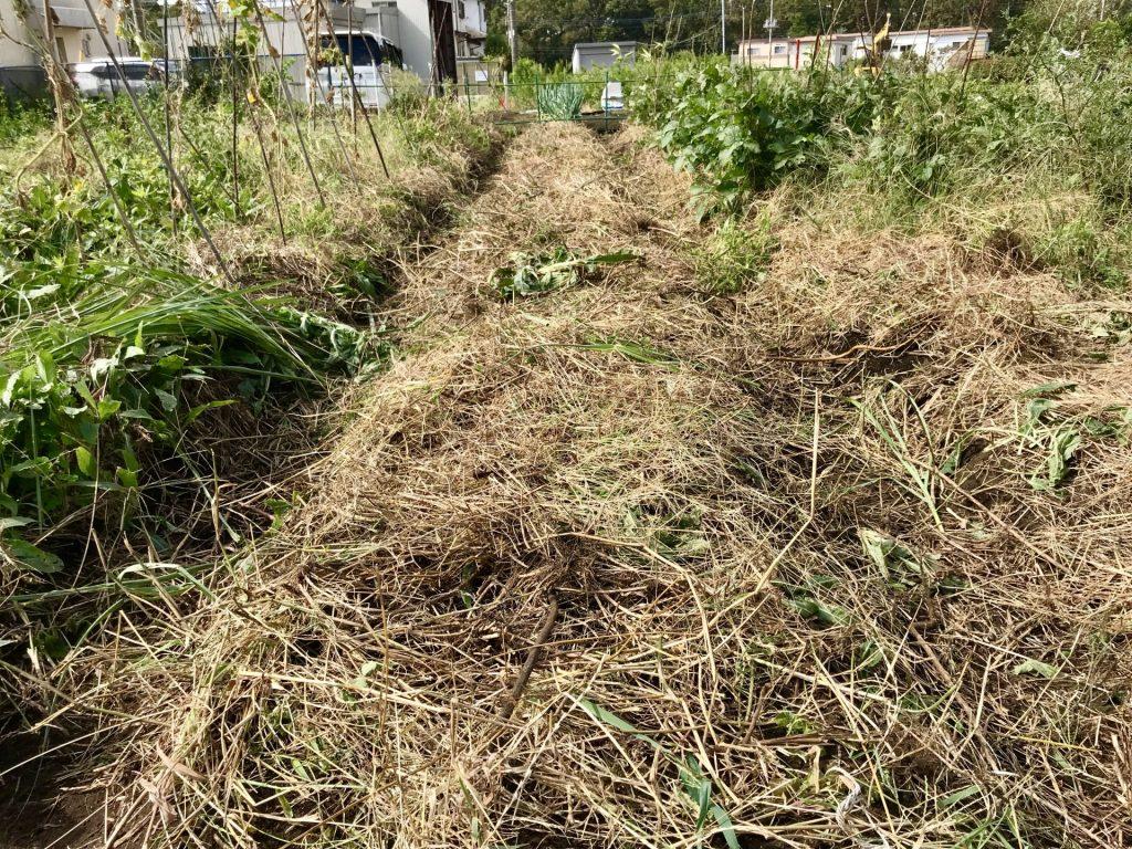 土をかぶせ、草をかぶせた所
