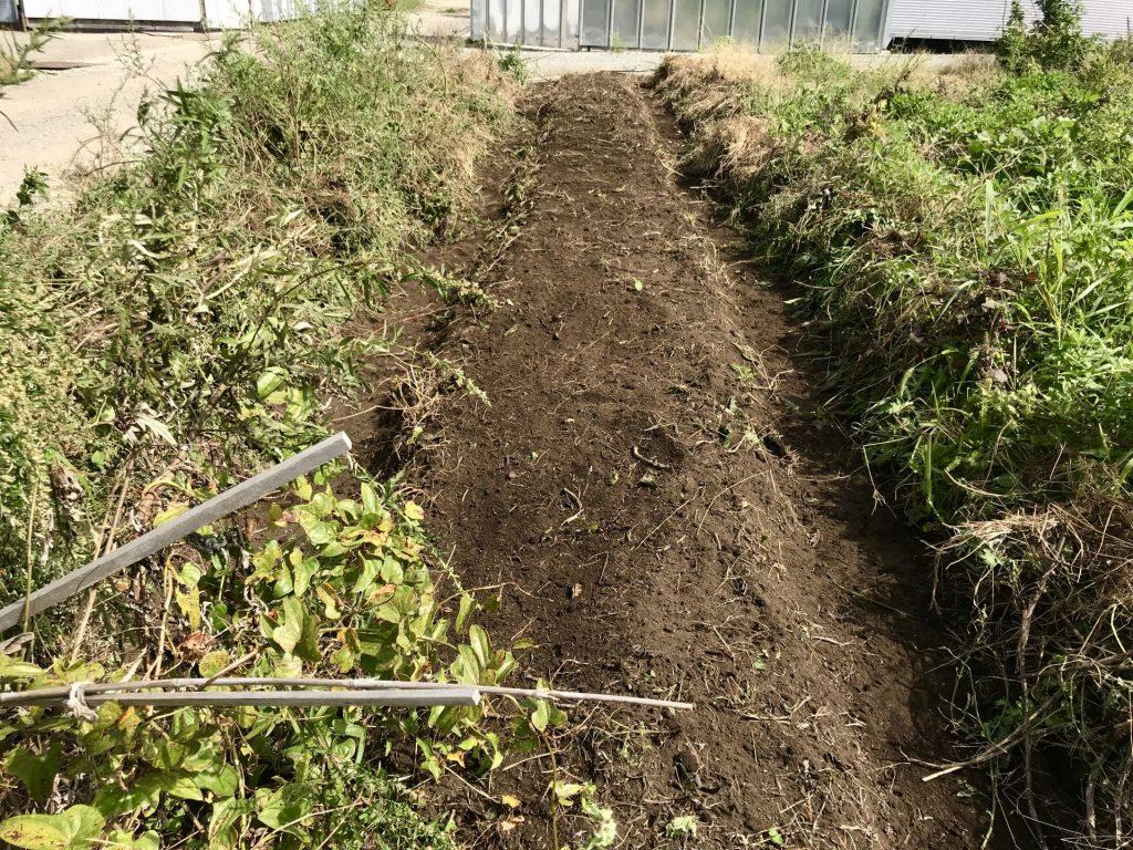 草刈りして修復した畝