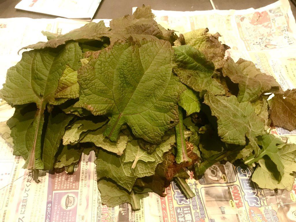 収穫してきたヤーコンの葉