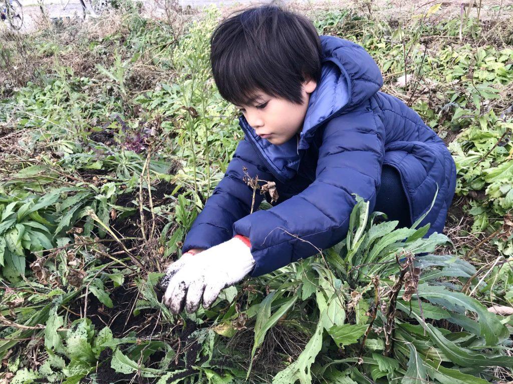 落花生を収穫する丸ちゃん