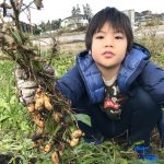 【自然農】息子と収穫作業♪究極の食育!?(2019/12/01)