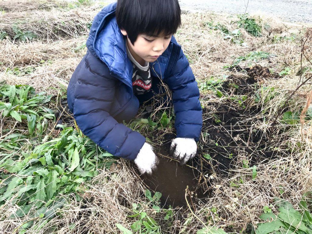 手で芋を掘る丸ちゃん
