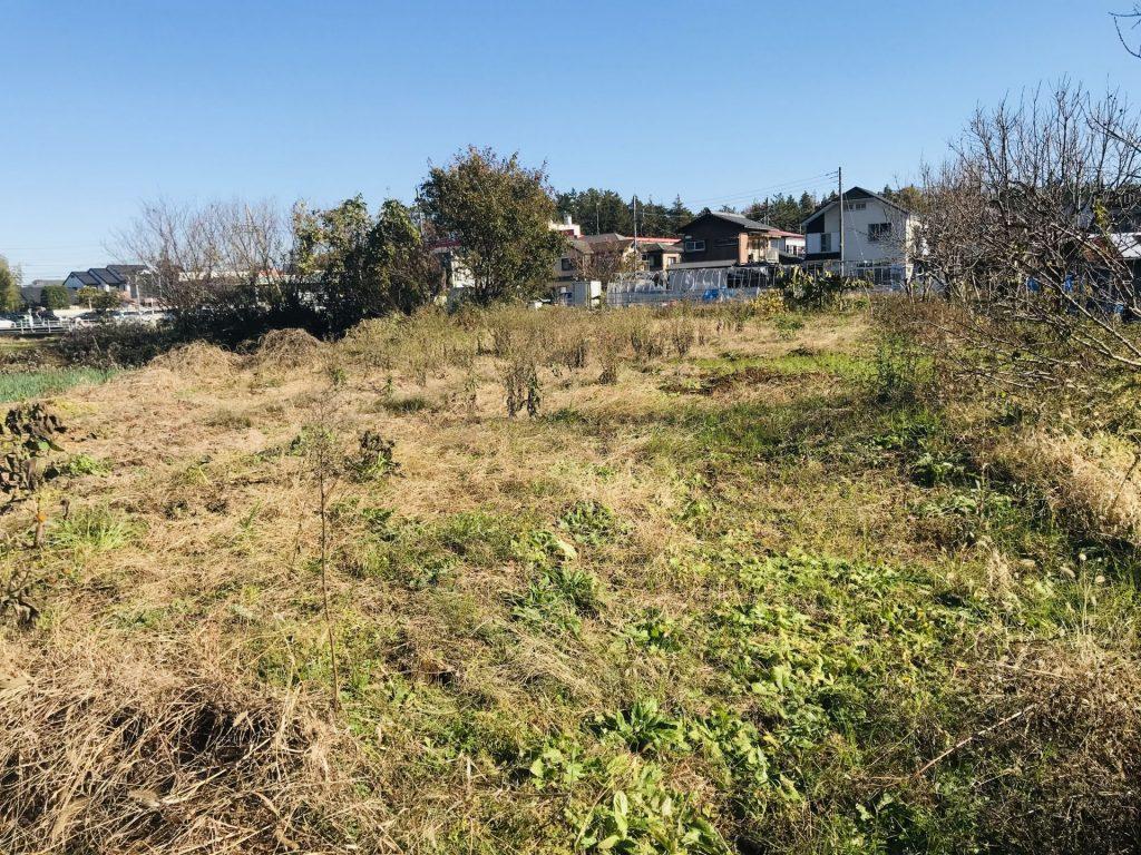 畑の南半分は草が覆っています