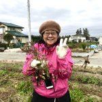 【自然農】自然農体験イベントで落花生と里芋を収穫しました(2019/12/13)