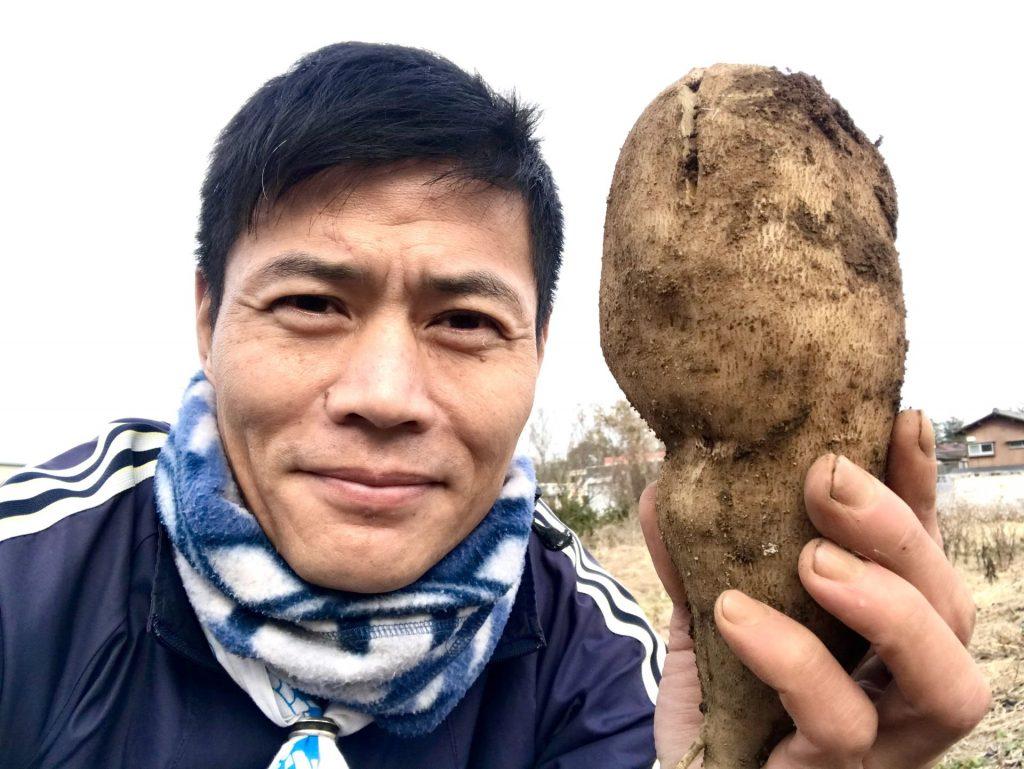 こんなにでっかい芋も採れました♪