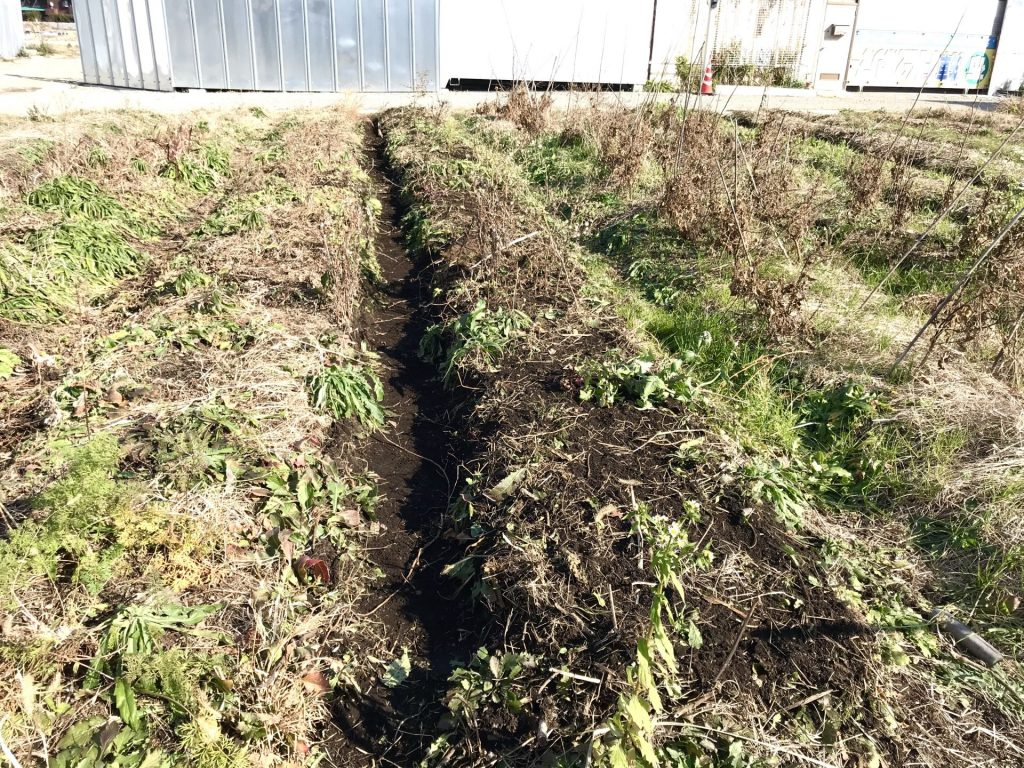 畝の修復作業もしました