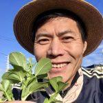 【自然農】お豆の摘心と間引き(2020/01/10)