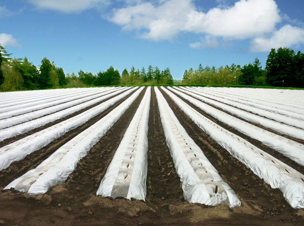 マルチの敷かれた畑