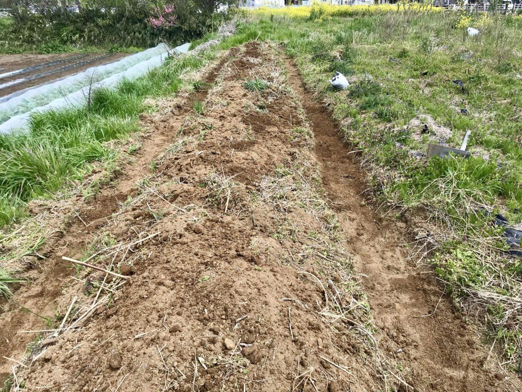 写真上部中央にあるレジ袋の中は、撤去したマルチです。 畝を作り終えたところ