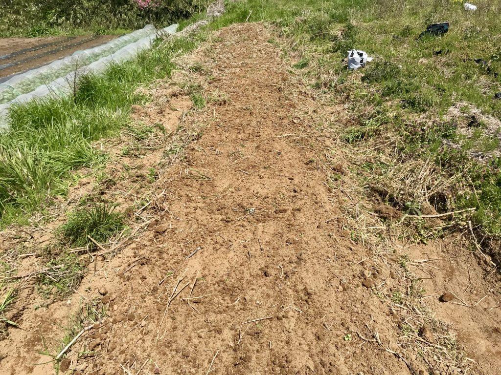畝の上部を平らに整えました