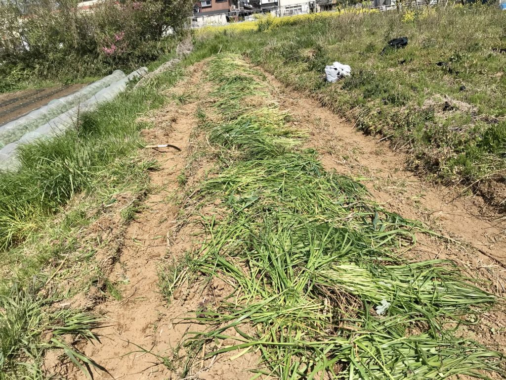 刈った草を被せました