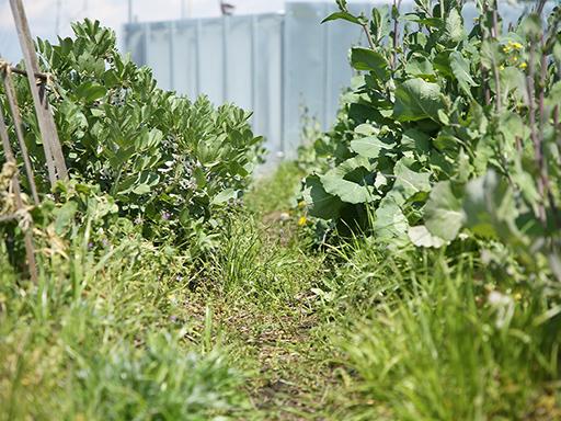 まんまる楽園の農園の様子。地表を草が覆っています