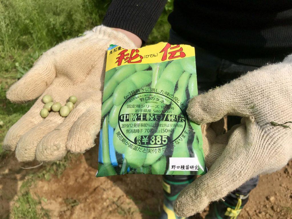 今回蒔いた大豆の種