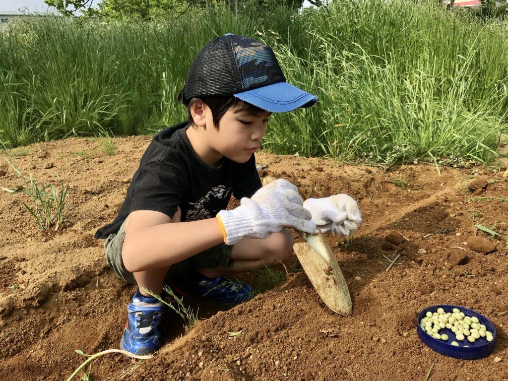 大豆の種を蒔く丸ちゃん