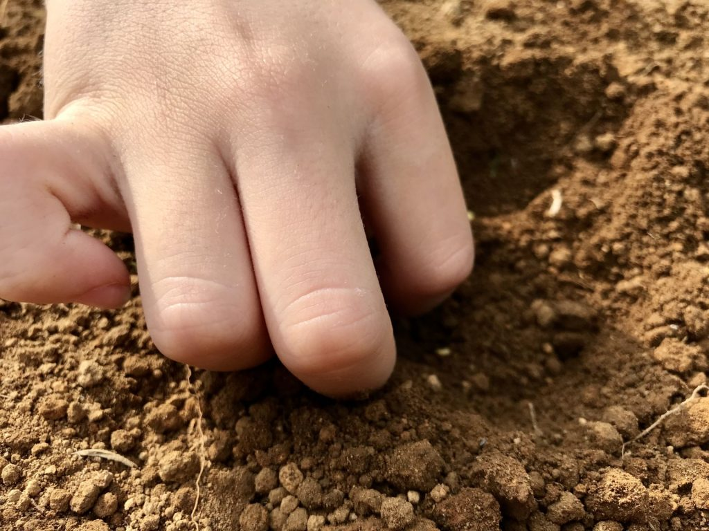 種を蒔くまるちゃんの手