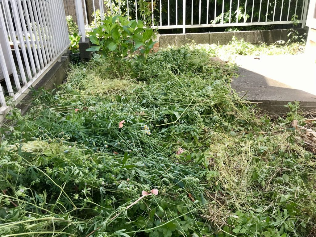草刈り後の庭