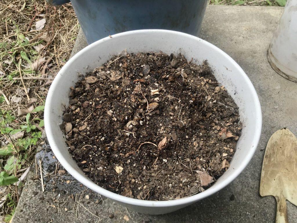 室内用に植木鉢を準備